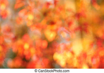 Autumn bokeh background - Fall bokeh background of autumn...