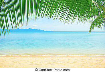 Beautiful beach with palm tree over the sand - Beautiful...