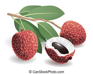 Lychee Fruit - Realistic vector illustration of a bunch of...