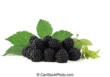 Blackberries - fresh blackberries with leaves on a white...