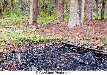 Remains of forest fire extinguished just in time - Saved:...