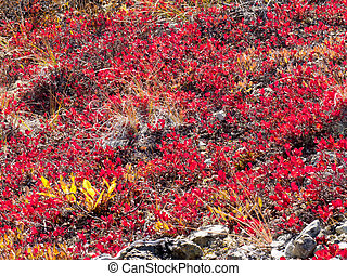 Red-golden alpine vegetation background - Red-golden...