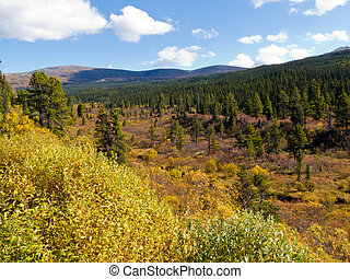 Fall in northern wilderness, Yukon T, Canada - Fall colored...