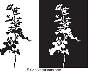 Burdock - Flowers and leaves of burdock on a black and white...