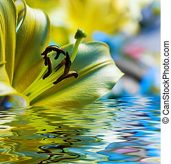 Yellow lilly reflected in rendered water
