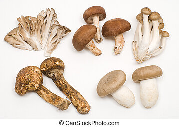 Various mushrooms - Various agian mushrooms isolated on...