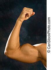 homem, bíceps, músculos