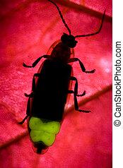 Firefly - Lightning Bug