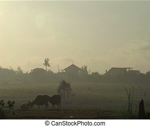 Rural scenery of Bali Originating camera Sony PD 170, tape...