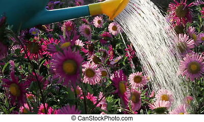 Flowers in the spray