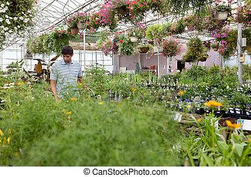 Man walking through the greenhouse