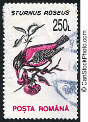 bird - ROMANIA - CIRCA 1993: stamp printed by Romania, shows...