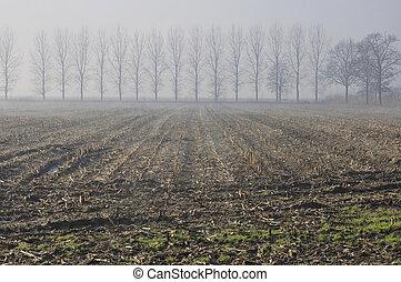 stubble fields in foggy winter