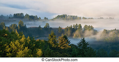 Foggy Mountainous Evergreen Forest