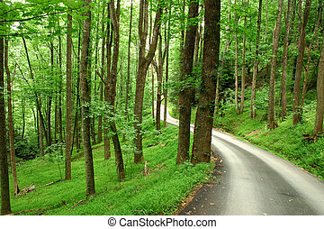 Windy Mountain Road - A small, windy mountain road through a...