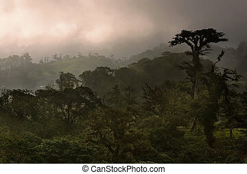 Costa Rica Cloud Forest - Dense Costa Rica tropical cloud...