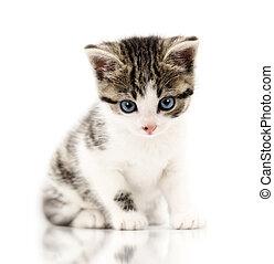 Little kitten in a funny pose