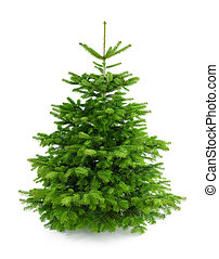 Perfect fresh Christmas tree without ornaments - Studio shot...