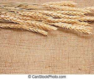 wheat on a burlap background
