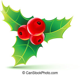 holly leaves and berries - Vector illustration of holly...