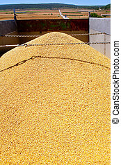 cereal harvest wheat mound in truck - cereal harvest wheat...