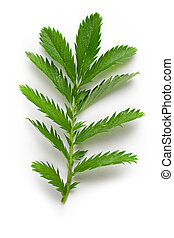 Plant on the white background
