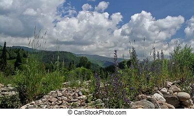 Altai foothills - Summer landscape of Altai