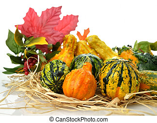 Gourds - Small Colorful Gourds Collection With Autumn Leaves
