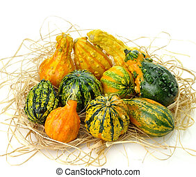 Gourds - Small Colorful Gourds Collection
