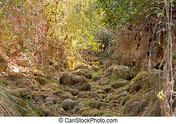 Path by a small dry river with wild vegetation