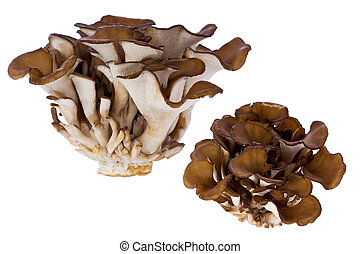 Hen of the Woods Mushroom Grifola frondosa - Composite of...