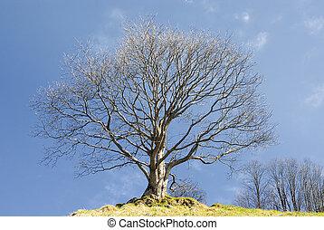 Oak Tree in Winter - Oak tree in winter in a field with a...