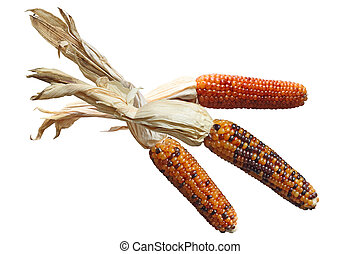 Indian Corns - Three colorful dried Indian corns isolated on...