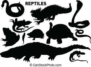 reptiles - vector set of various reptiles