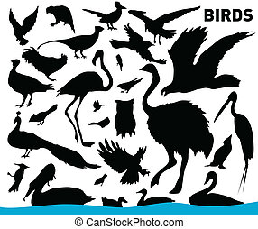 birds - vector set of various birds