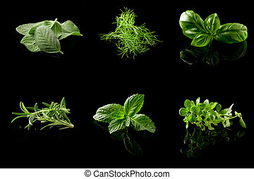 Herbs Collage on black background