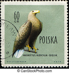 POLAND - CIRCA 1960: A stamp printed in Poland shows...