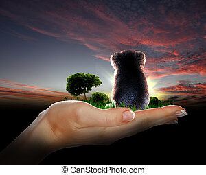 Little koala watching the sunset - Little koala sitting and...