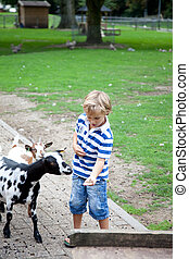 Feeding a goat - Young boy is feeding a goat.