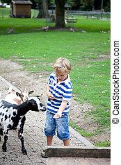 Feeding a goat - Young boy is feeding a goat.