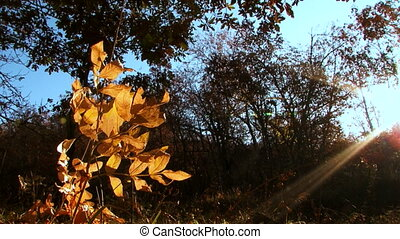 Autumn landscape - Beautiful autumn leaves against clear...
