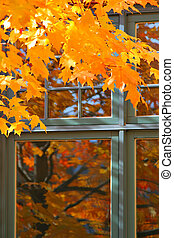 Autumn Color by the Window
