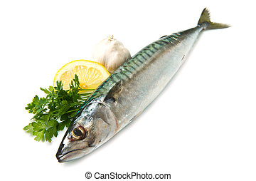 mackerel fish isolated on white background