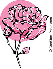 decorative pink roses in bud on a white background