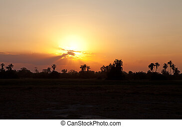 Beautiful orange sunset in Africa with shades of palm trees