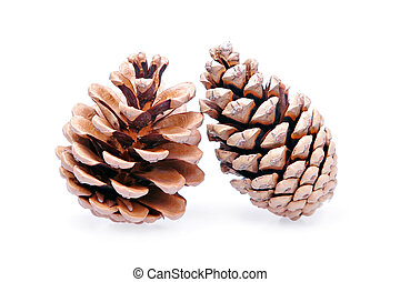 two isolated pinecones
