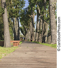Wooden walkway beetwin trees in the park