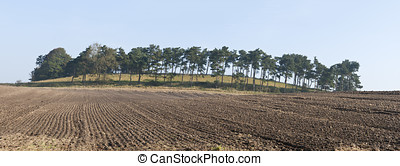 Harrowed Field - Harrowed field with pine trees in the...