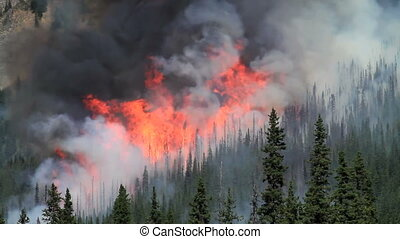 Forest fire flames 01 - Huge flames and smoke of a large...