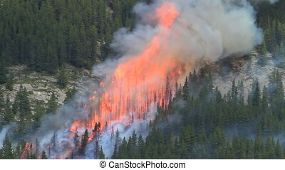 Forest fire flames 03 - Huge flames and smoke of a large...